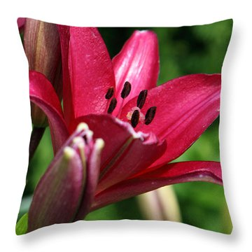 Welcoming Throw Pillow by Amanda Barcon