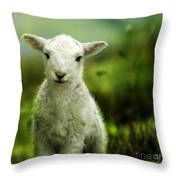 Welsh Lamb Throw Pillow