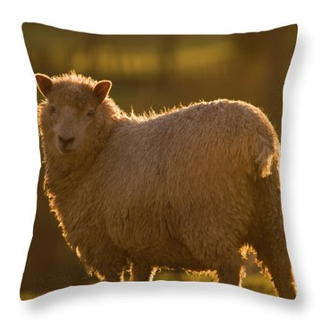 Welsh Lamb In Sunny Sauce Throw Pillow