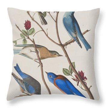 Western Blue-bird Throw Pillow