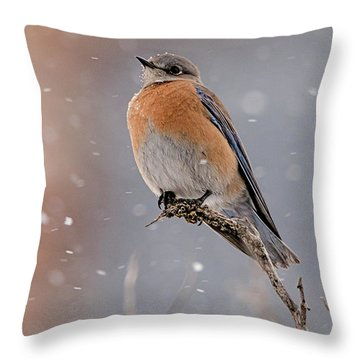 Western Bluebird In Winter Throw Pillow