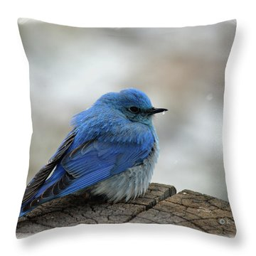 Western Bluebird On Cold Day Throw Pillow