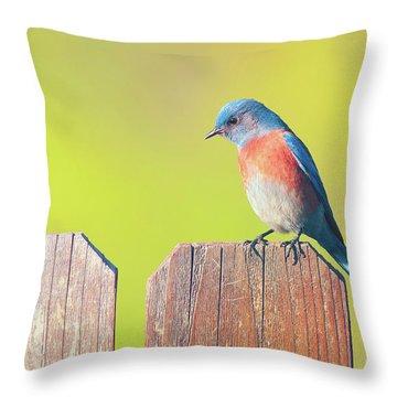 Western Bluebird Throw Pillow by Ram Vasudev