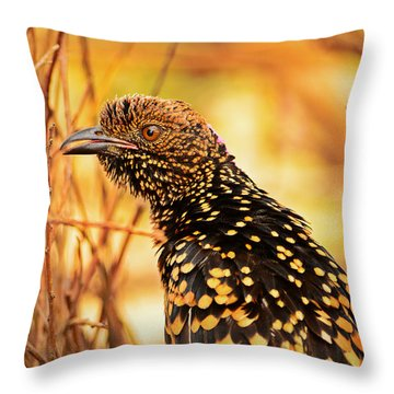 Western Bowerbird Throw Pillow
