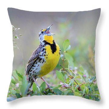 Western Meadowlark Throw Pillow by Jack Bell