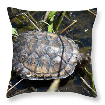Western Pond Turtle, Actinemys Marmorata Throw Pillow
