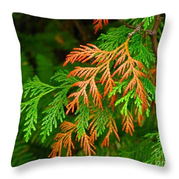 Western Red Cedar Throw Pillow