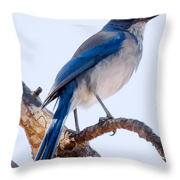 Western Scrub-jay Throw Pillow