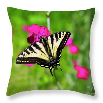 Western Tiger Swallowtail Butterfly Throw Pillow