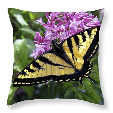 Western Tiger Swallowtail Butterfly Throw Pillow by Daniel Hagerman