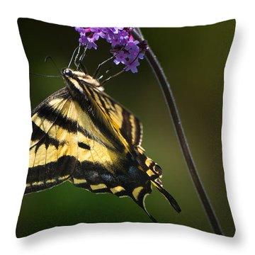 Western Tiger Swallowtail Butterfly On Purble Verbena Throw Pillow