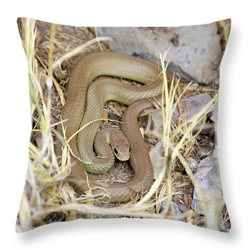 Western Yellow-bellied Racer, Coluber Constrictor Throw Pillow