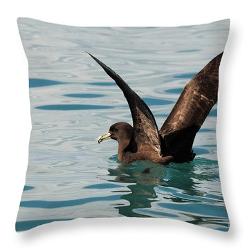 Throw Pillow featuring the photograph Westland Petrel Raising Wings by Max Allen