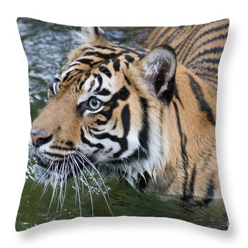 Wet And Wild 1 Throw Pillow