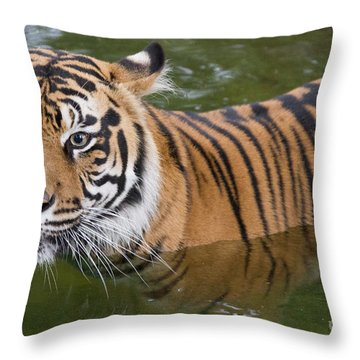 Wet And Wild 2 Throw Pillow