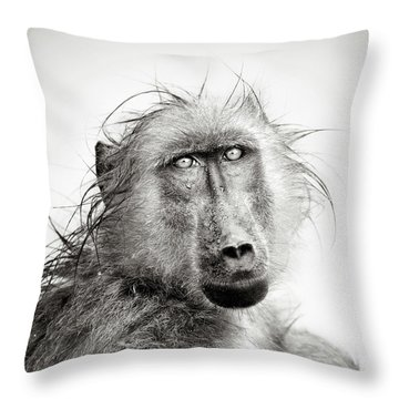 Wet Baboon Portrait Throw Pillow