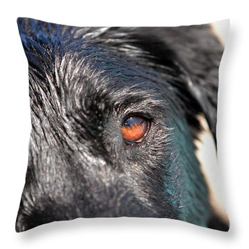 Throw Pillow featuring the photograph Wet Black Lab by Vivian Krug Cotton