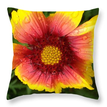 Throw Pillow featuring the photograph Wet Blanket by Elizabeth Sullivan