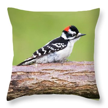 Throw Pillow featuring the photograph Wet Downy Woodpecker  by Ricky L Jones