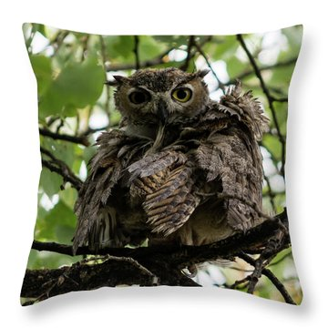 Wet Owl Throw Pillow