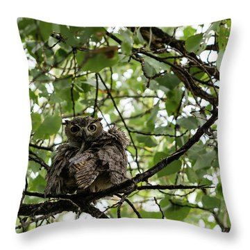 Wet Owl - Wide View Throw Pillow