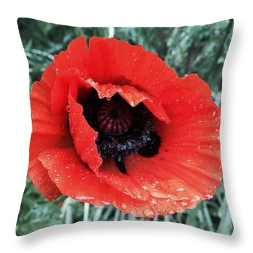 Wet Poppy Throw Pillow