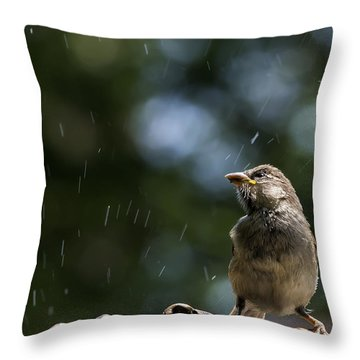Wet Sparrow Throw Pillow