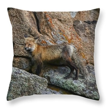 Wet Vixen On The Rocks Throw Pillow by Perspective Imagery