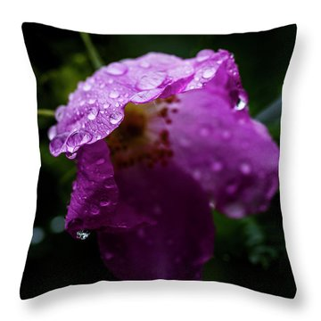 Throw Pillow featuring the photograph Wet Wild Rose by Darcy Michaelchuk