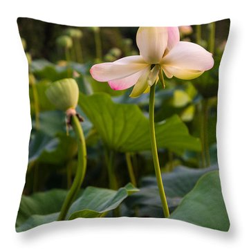 Wetland Flowers Throw Pillow
