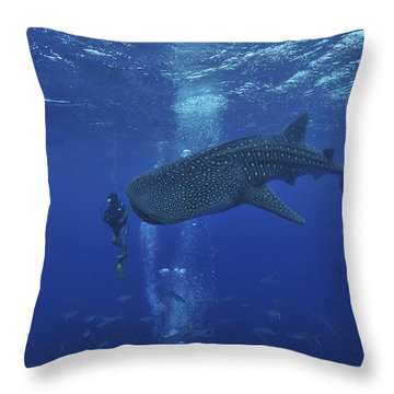Whale Shark And Diver, Maldives Throw Pillow