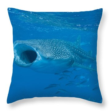 Throw Pillow featuring the photograph Whale Shark, Ari And Male Atoll by Mathieu Meur