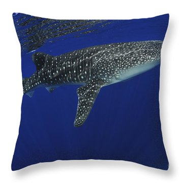 Whale Shark Near Surface With Sun Rays Throw Pillow by Mathieu Meur
