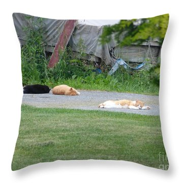 What A Day Throw Pillow by Donald C Morgan