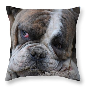 English Bull Dog Throw Pillows