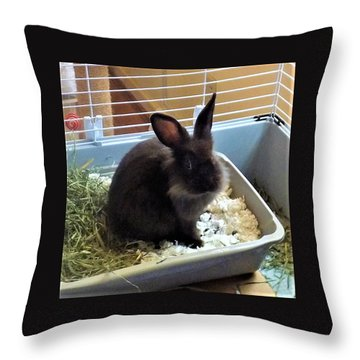 Throw Pillow featuring the photograph What? by Denise Fulmer