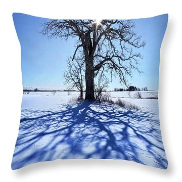 Throw Pillow featuring the photograph What I Am, What I Was, What I Will Be by Phil Koch