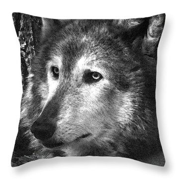 What Is A Wolf Thinking Throw Pillow by Karol Livote