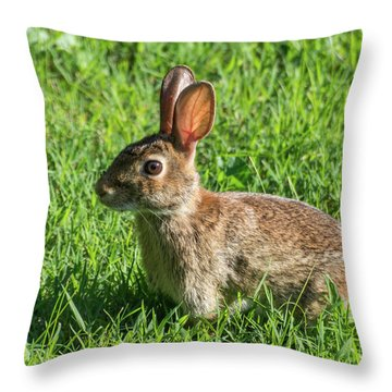 What? Throw Pillow
