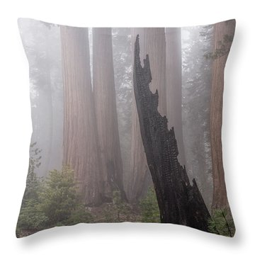 Throw Pillow featuring the photograph What Lurks In The Forest by Peggy Hughes