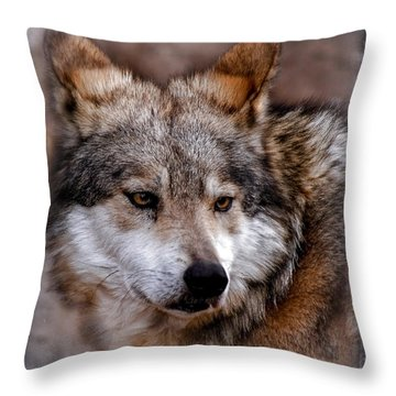 Throw Pillow featuring the photograph What Was That by Elaine Malott
