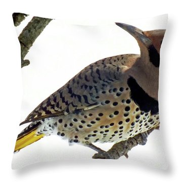 What Was That - Northern Flicker Throw Pillow
