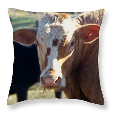 Throw Pillow featuring the photograph What You Lookin' At by Betty Northcutt