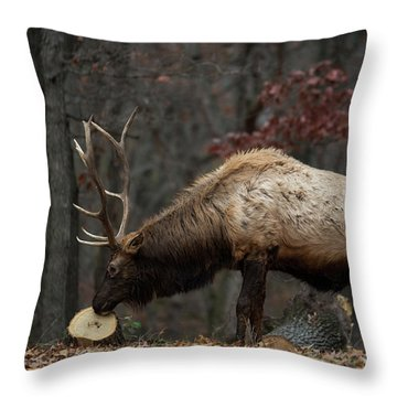 What's This? Throw Pillow by Andrea Silies