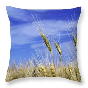 Wheat Trio Throw Pillow by Keith Armstrong