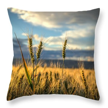 Wheat's Up Throw Pillow by Brad Stinson