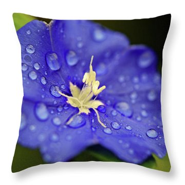 Throw Pillow featuring the photograph When Old Becomes New by Melanie Moraga