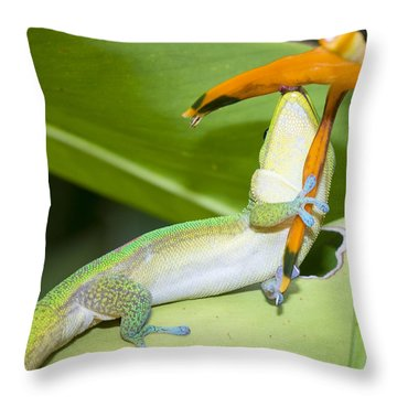 When You Love Something...this Much Throw Pillow