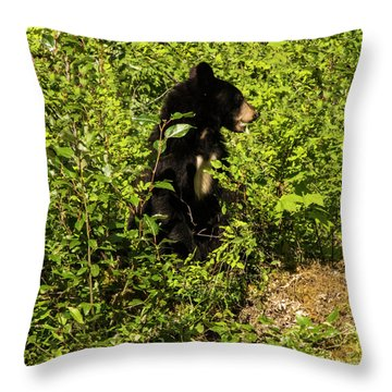 Where Are The Berries? Throw Pillow