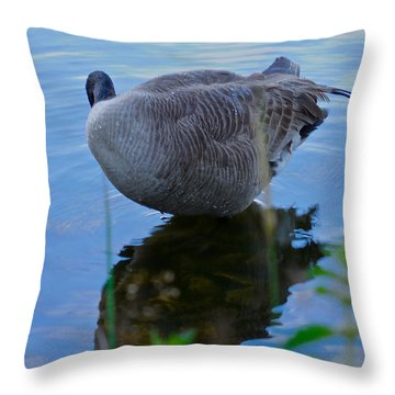 Throw Pillow featuring the photograph Where Are You Shadow by Sher Nasser